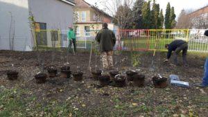 Moderny Samorin pre vsetkych skolsky dvor Zakladna skola Mateja Bela komunita dobrovolnictvo sadenie stromy